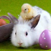 Easter rabbit chick eggs